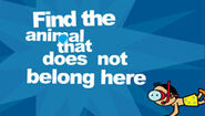 Vitaminix-Find the Animal That Does not Belong Here