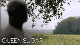 Queen Sugar Extended Trailer 2 Queen Sugar Oprah Winfrey Network