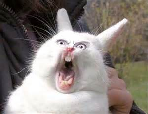 A Bunny Screaming