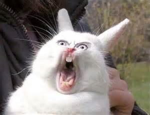 A Bunny Screaming