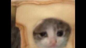 Cat bread singing bakimatai-1
