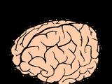 R-Brain Hardwork