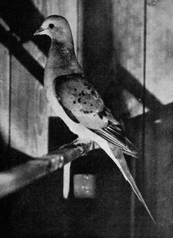 Bird lore (1913) (14562557107)