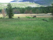Mountain meadow at Yellowstone National Park Picture 1196