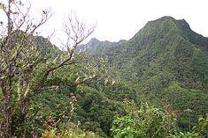 Rarotonga Island interior