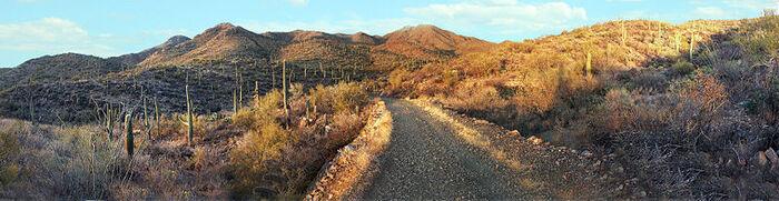 Saguaro National Park Panorama