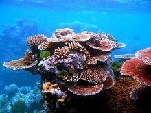 Coral Outcrop Flynn Reef