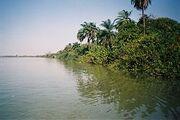 RiparianForestGambia