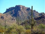 Saguaro rahvuspark