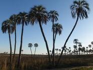 El Palmar Plains