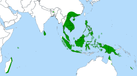 Nepenthes distribution
