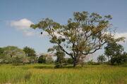 Casamance landscape