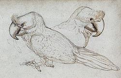 Gelderland1601-1603 Lophopsittacus mauritianus
