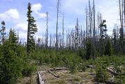 Burn area in Yellowstone National Park
