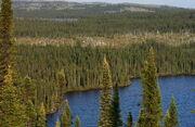Taiga Landscape in Canada