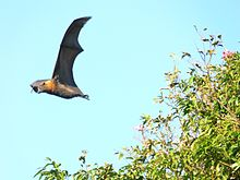 Flying bat with tree orig