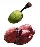 Saguaro fruit