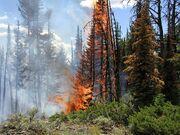 Yellowstonefire