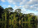 Troopiline vihmamets