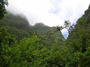 Forest Los Tilos