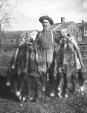Adirondack Trapper holding fox pelts (cut)