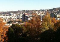Dunedin skyline