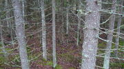 Forest in Jalasjärvi