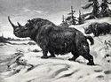 Wooly rhinoceros