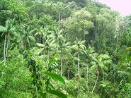 Parque Nacional do Itatiaia floresta