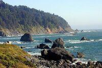 Redwood coast
