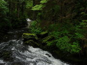 Tongass National Forest 3
