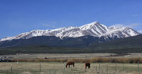 Mount Elbert and horses