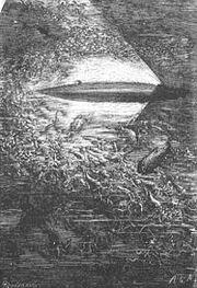 Nautilus Neuville