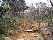 Path of Mount Kinabalu