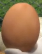 Rabbids Egg2