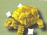 Dagol Tortoise