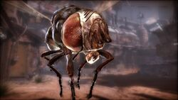 Giantfly