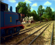 Thomas'Rescue42