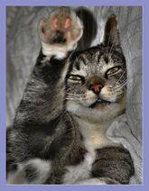 Cat-Els-Wetting