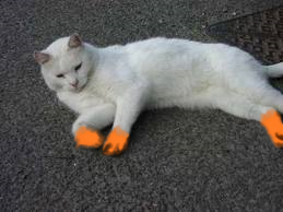 File:Orangefoot.png