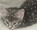 Thumbnail for version as of 16:48, November 1, 2011