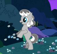 Di'angelo Pony