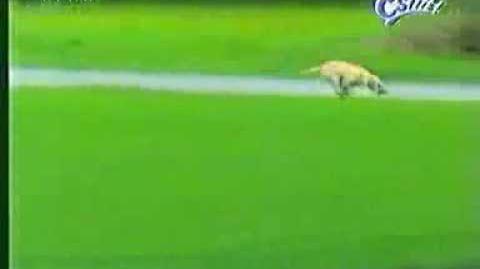 Dog runs into brick mailbox