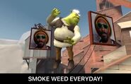 Shrek Smoke Weed Everyday dance showdown meme sfm