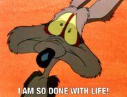 Wile E. Coyote meme