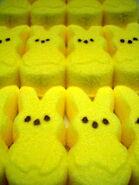 Yellow-peeps