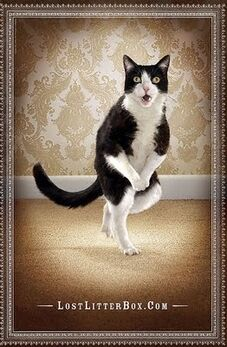 Gotta Go Pee Cat