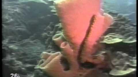 Seahouse Sponge