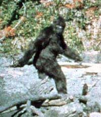 File:Big foot.jpg