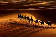 Caravan-in-the-Desert-010